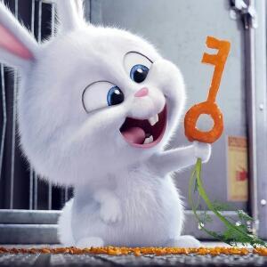 爱胡萝卜的兔子