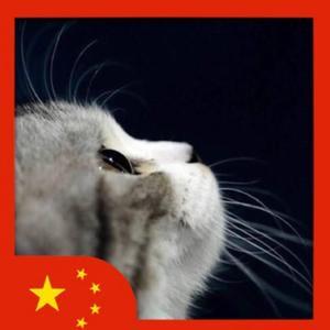 戴围裙的猫
