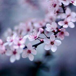 微笑如花绽放