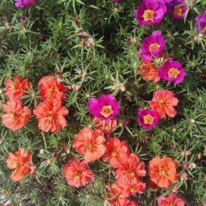 阳光下的花